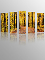 Forest on Canvas wood Framed 5 Panels Ready to hang for Living Decor