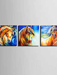 E-HOME® Stretched Canvas Art Brown Horse Decoration Painting  Set of 3