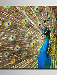 E-HOME® Stretched Canvas Art Peacock Decorative Painting One Pcs