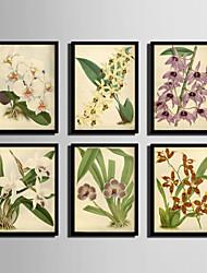 E-HOME® Framed Canvas Art,Flower Framed Canvas Print Set of 6