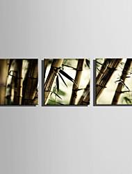 E-HOME Stretched Canvas Art Bamboo Forest Decoration Painting Set Of 3
