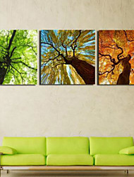 Art Print Floral/Botanical Pastoral Three Panels Horizontal Print Wall Decor For Home Decoration