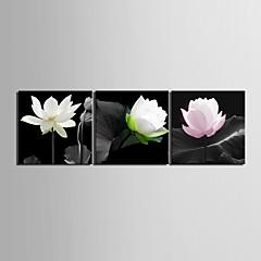 Leinwand Kunst Blumen Elegantes Lotus Set von 3