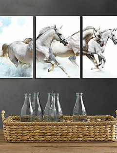 Toiles Tendues art animalier White Horses