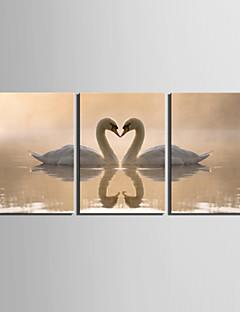 Toiles Tendues art animalier Swan Lovers Lot de 3