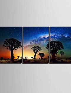 Keilrahmen Kunst-Wüste im Schatten des Baumes Satz von 3