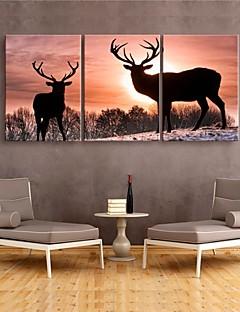 étiré toile art décoratif cerfs ensemble de trois de peinture