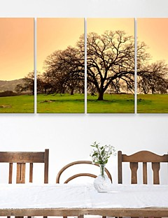 E-HOME® Stretched Canvas Art The Trees And Grass Decorative Painting Set of 4