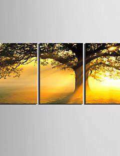 e-Home® sträckta canvas konst solnedgång under trädet dekorativt måleri uppsättning av 3