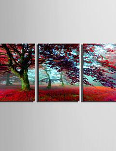 Landschaft / Botanisch Leinwand drucken Drei Paneele Fertig zum Aufhängen , Vertikal