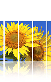 VISUAL STAR®Sunflower High Quality Canvas Painting Art Natural Stretched Canvas