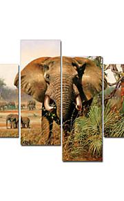 시각 star®african 동물 장식 벽 예술 높은 품질의 캔버스 그림을 뻗어
