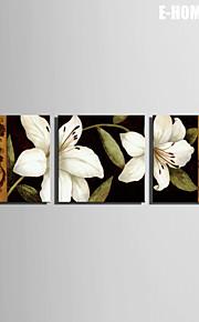 e-home® strukket lerret kunst hvit lilje dekormaling sett med 3