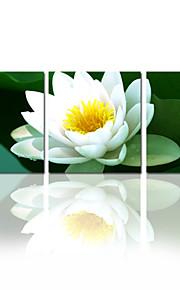 visuelle fleur star®beauty impression de toile tendue décor de mur de la maison art prêt à accrocher