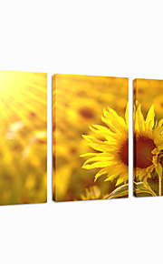 visuell star®sunflower vegg dekor lerret utskrift triptykon veggen henger bilde klar til å henge