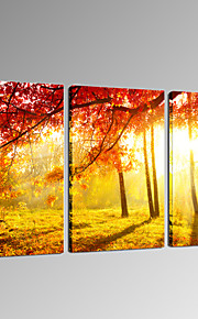 VISUAL STAR®Autumn Forest Canvas Print for Home Decor - 3 pieces Sunset Scenery Wall Art Ready to Hang