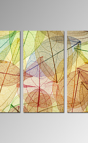VISUAL STAR®Colorful Vein Leaves Photo Print Botanical Stretched Canvas Art Set of 3Ready to Hang