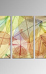 Still Life / fritid / Botanisk / Moderne / Romantikk / Pop Art Lerret Print Tre Paneler Klar til å henge , Lodrett