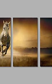 Stretched Canvas Print Animal Modern,Three Panels Canvas Horizontal Print Wall Decor For Home Decoration