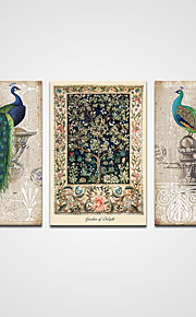 Canvas Prints Classic Peacock Painting Animal Picture on Canvas  3pcs/set Wall Art  Ready to Hang