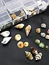100st mix formar naturliga skal tillbehör som inte ingår box 3d nail art dekoration