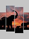 Sträckt Canvastryck Konst Animal Elephants Set av 4